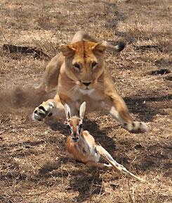 lionhunt_diaz_ts